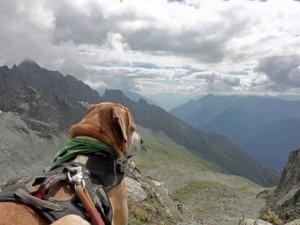 Dare Greatly Coaching   Paco enjoying the view